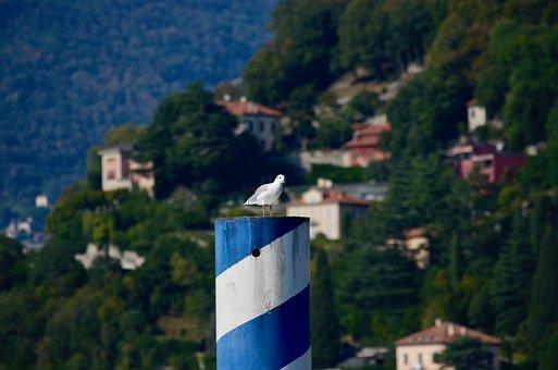 Seagull, Water Bird, Bird, Seevogel, Lake, Alpine