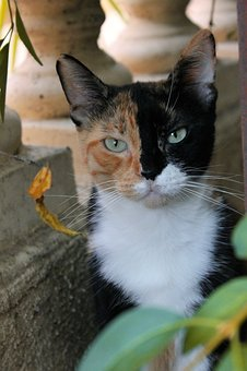 Cat, Pussy, Tricolor, Tawny, Black, White, Cute, Animal