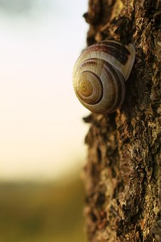 Snail, Autumn, Tree, Bark, Nature, Brown, Bokeh, Wood