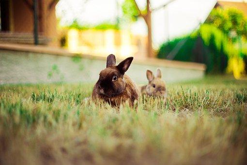 Rabbit, Nature, Animal, Hare, Bunny, Mammal, Outdoor