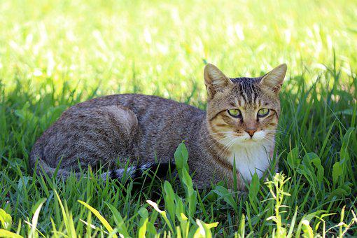 Cat, Holding The Cat, Grass, Animal, Pet, Tabby, Meow
