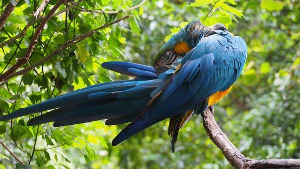 Ara, Parrot, Plumage, Colorful, Bird, Birds, Blue