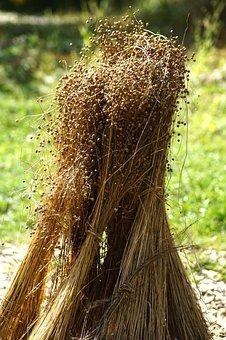 Flax, Canvas, Herbal Raw Materials, Leinbündel
