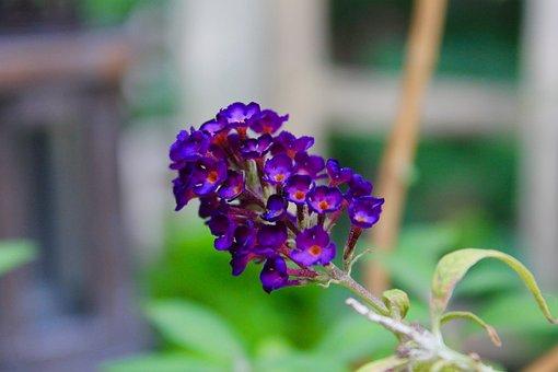 Flower, Violet, Plants, Nature, Flowers, Garden, Flora