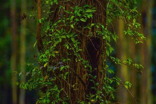 Nature, Plant, Flowering, Bark