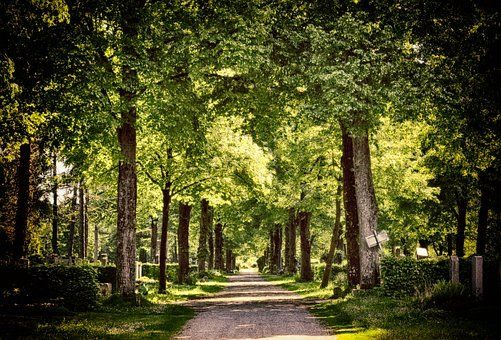 Away, Forest, Trees, Cemetery, Nature, Forest Path