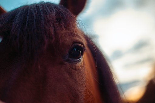 Horse, Hucul, Animal, Nature, Feast, Organic Farm