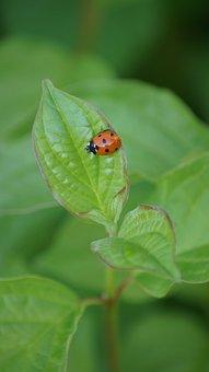Map, Ladybug, Luck