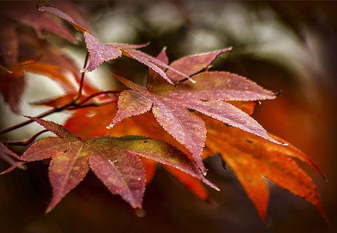 Holidays, Autumn, Nature, Background, Leaves, Color