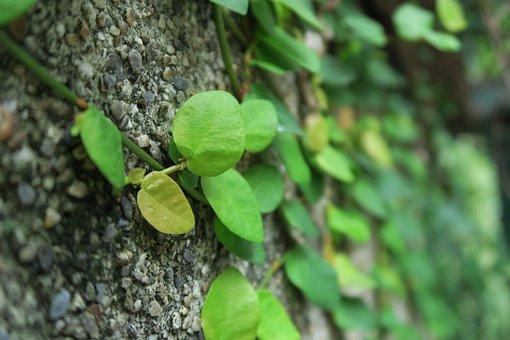 Green, Plant, Leaf, Shallow Depth Of Field