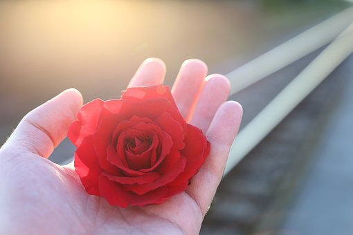 Stop Youth Suicide, Railway, Red Rose In Hand