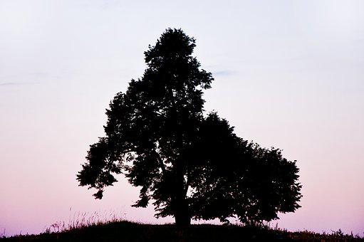 Tree, Morning, Silhouette, Sunrise, Hill, Landscape