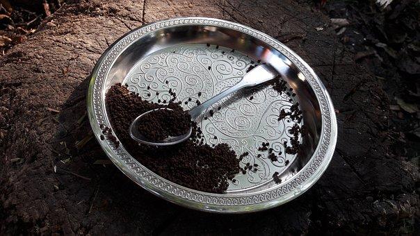 Tea, Teaspoon, Silver, Drink, Wood, Nature