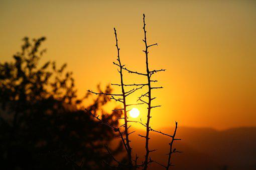 Sunset, Nature, Branches, Tree, Landscape, Sky