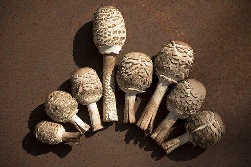 Mushroom, Boletes, Autumn, Forest, Nature