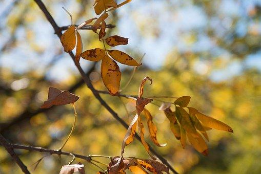 Foliage, Leaves, Tree, Green, Autumn, Nature, Colorful