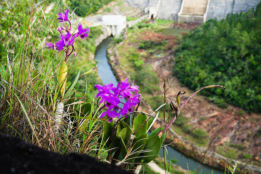 Flower, Dam, Belize, Nature, Plant, Landscape, Water