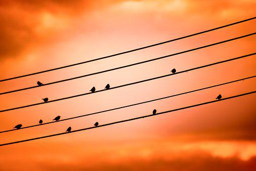 Birds On A Wire, Sunset, Sky, Clouds, Evening, Dusk