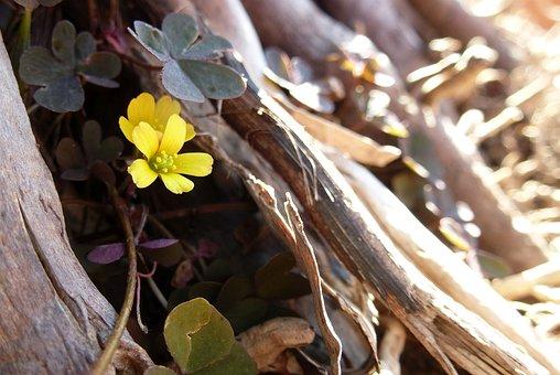 Blossom, Bloom, Mini, Flower, Macro, Small, Close Up