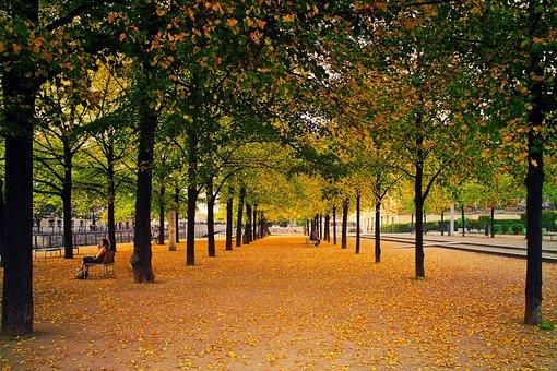 Avenue, Autumn, Leaves, Nature, Green, Orange, Colorful
