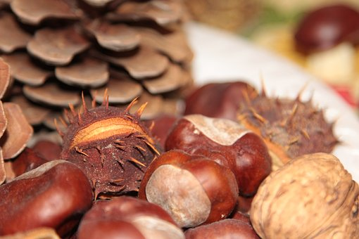 Chestnuts, Cones, Pine Cone, Chestnut, Dining Table