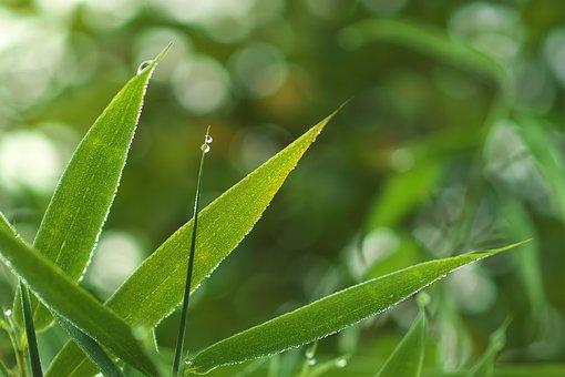 Green, Wet, Drip, Nature, Plant, Fresh, Leaf