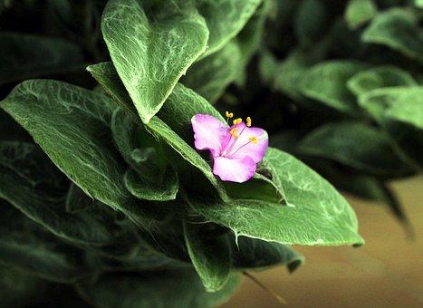 Vegetable, Flower, Garden, Nature, Flora, Plant, Beauty