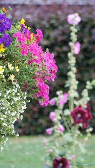 Hanging Basket, Garden, Nature, Sunny, Summer