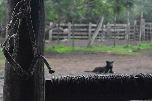 Dog, Horseshoe, Horse, Herrero, Iron, Metal, Symbol