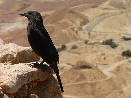 Bird, Masada, Israel, Deadsea, Black, Panorama, Legion