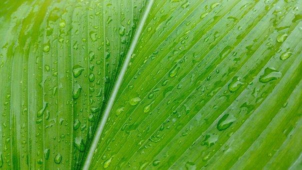 Khanna, Leaf, Nature, Green, Plants, Results, Pattern
