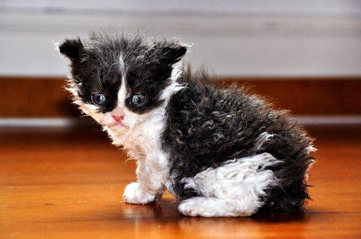 Cat, Kitten, Animal, Sweet, Small, Ground, Parquet