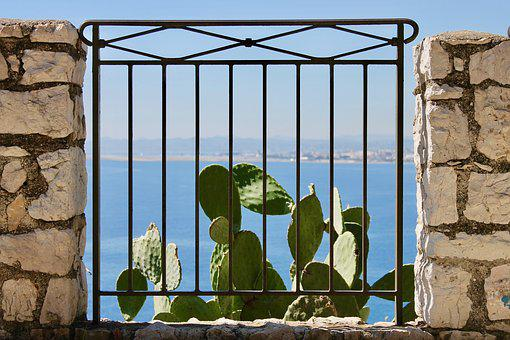 Cactus, Plant, Vegetation, Barrier, Plants, Nature