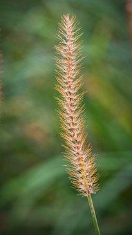 Blade Of Grass, Blossom, Bloom, Seeds, Nature, Close Up