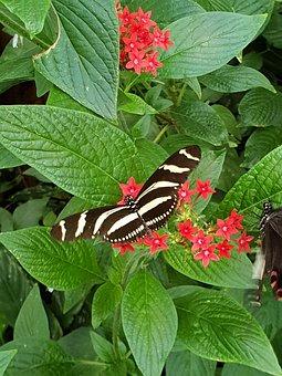 Beautiful, Nature, Butterfly, Summer, Animals