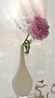 Flower, Peony, Romantic, Spring, Pink, Vase