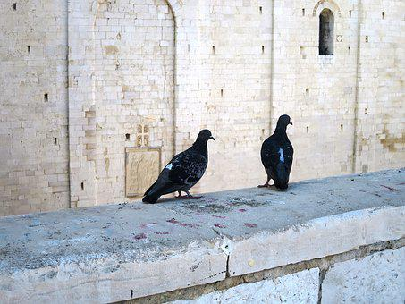 Pigeon Pair, Masonry, Italy