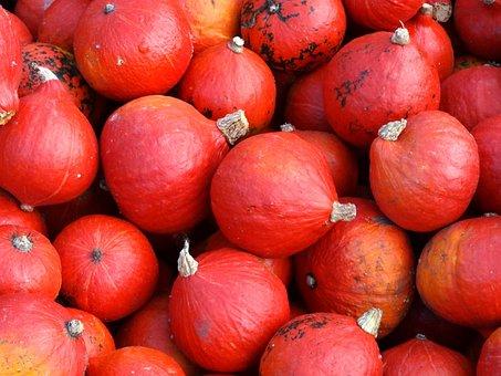 Pumpkin, Autumn, Pumpkins, Hokkaido, Squash, Kabocha