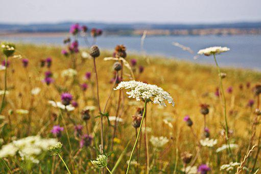 Field Meadow, Summer, Wild Flowers, Vacations, Hiking
