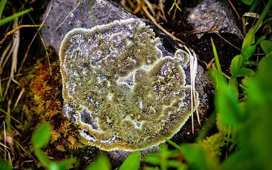 Lichen, Forest, Ural, Green, Moss, Nature, Tree, Bark