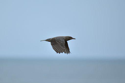 Animal, Sea, Beach, Bird, Wild Birds, Method Bulbul