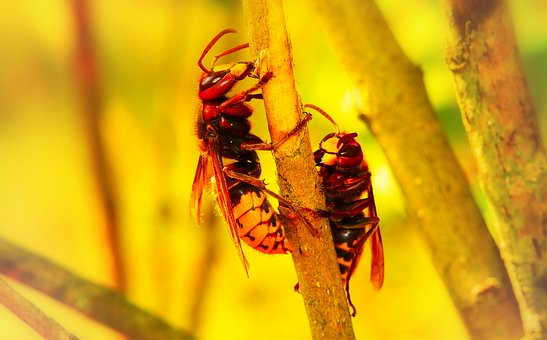 European Hornet, Insects, Work, Socket, Wood, Animals