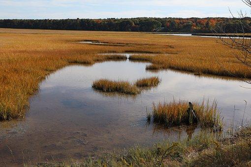 Autumn Marsh, Marsh, Nature, Autumn, Grass, Water, Tree