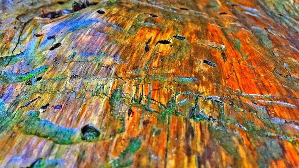 Tree, Bark, Colors, Background, Old, Worn, Texture