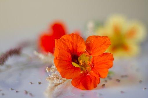 Wild Flower, Tender, Flower, Bloom, Blossom, Bloom