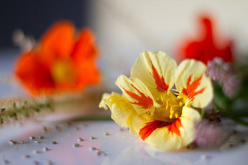 Flower, Blossom, Bloom, Wild Flower Meadow, Nature