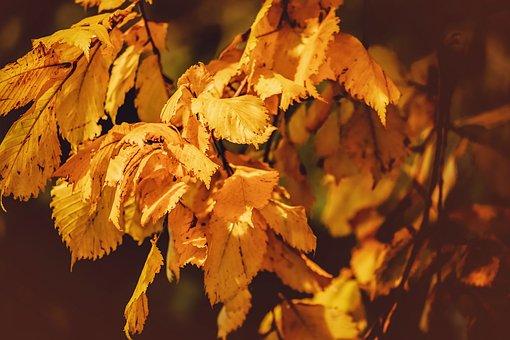 Leaves, Yellow, Branch, Autumn, Evening Light