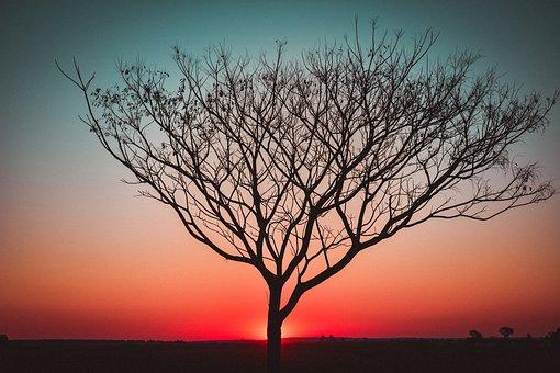 Sunset, Backlight, Tree, Landscape, Light, City, Urban