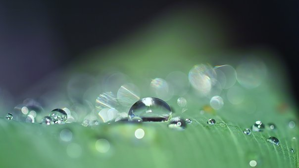 Drop Of Water, Dew, Close Up, Nature, Drip, Dewdrop