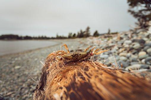 Log, Crab, Beach, Ocean, Cloudy, Day